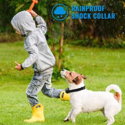 300 Meter Biziborong Pet Dog Training Collar Remote Electronic Shock - R984